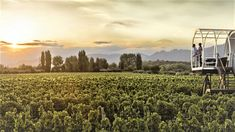 Who would you like to be with in this beautiful vineyard in Mendoza, Argentina? Wine Hotel, Mendoza, Underwater Hotel, Unusual Hotels, Jacuzzi Outdoor, One With Nature, Vacation Spots, South America, Vineyard