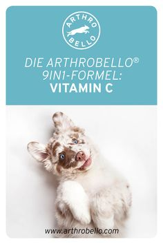 Das Antioxidans ist unerlässlich wichtig für den Vierbeiner, da es eine normale Kollagenbildung ermöglicht und so die Knorpelregeneration und -bildung unterstützt. Vitamin C, Art, Collages, Pet Dogs, Education, Art Background, Kunst, Performing Arts, Art Education Resources