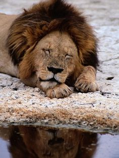 Even a king needs his sleep