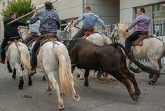 Success: Bull Stabbing Festival Banned