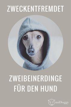 Tolle Hacks für Deinen Hund.