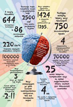 Мозг. Цифры и факты Keep Fit, Study Motivation, Nervous System, Craft Tutorials, Helpful Hints, Anatomy, Massage, Mindfulness, Science