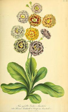 Vintage Botanical Prints, Botanical Drawings, Botanical Flowers, Botanical Art, Nature Illustration, Watercolor Artwork, Leaf Art, Nature Prints, Illustrations