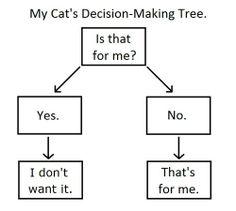 Cat decision-making tree...