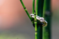 Love this picture of wedding rings | Hochzeitsblog marryMAG| Der…