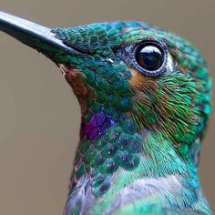 beautiful hummingbird photography 1