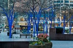 blue trees seattle 4 Seattles Stunning Blue Trees Highlight Global Deforestation Issues