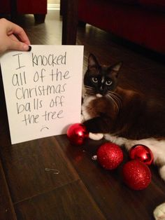 19 Dogs And Cats Who Have Shamelessly Ruined Christmas - World's largest collection of cat memes and other animals Bad Cats, Silly Cats, Cats And Kittens, Funny Cats, Cute Funny Animals, Funny Animal Pictures, I Love Cats, Cool Cats, Cat Shaming