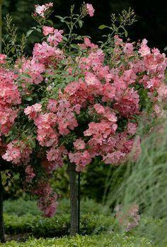 Floras