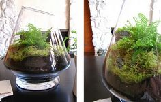 Instructions on how to make a terrarium! I've always wanted to try this...