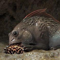 Curious Creatures, Sea Creatures, Creature Concept Art, Amphibians, Fantasy Art, Wildlife, Artwork, Character, Atticus