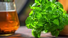 Meduňka - jak ji sklízet a skladovat + 5 domácích receptů