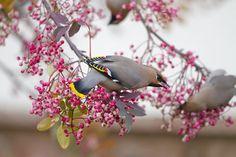 Wildlife Photography by Ron McCombe birds, mammals, flowers and landscapes #ron #mccombe, #photographer, #photography, #wildlife, #birds, #seabirds, #mammals, #flowers, #landscapes, #scotland, #england, #finland, #usa, #otter, #gannet, #puffin, #fox, #badger, #hedgehog, #garden #birds, #woodland #birds…