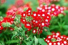 Plants, Red, Flowers, Fotografia, Plant, Planets
