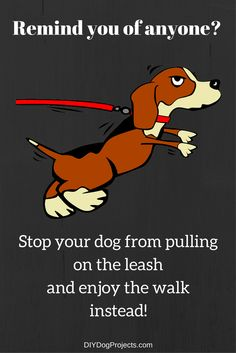 DIY Dog Projects - Is your dog pulling your arm from its socket?