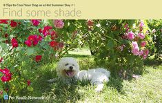 When you're hot, your dog is just as hot. Here are some great tips on how to cool the pup down!