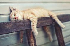 Sleeping ginger kitty preciousness.