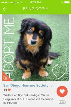Share the love: Your Dogly photos help rescues #dogs #pets