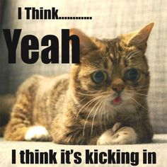 Lol druggie kitty