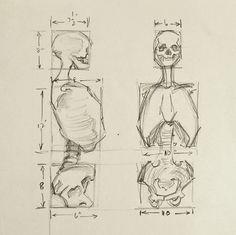 Anatomy Skeleton Study Drawing Human Figure Drawing, Figure Drawing Reference, Anatomy Reference, Art Reference Poses, Anatomy Study, Learn Drawing, Human Anatomy Drawing, How To Draw Anatomy, Figure Drawing Tutorial