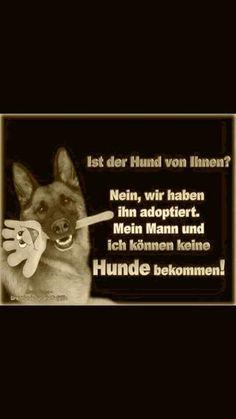 Ist der Hund von Ihnen? - #der #Hund #Ihnen #Ist #von Irish Terrier, Humor, Funny Facts, Funny Things, Funny Stuff, Haha, Funny Pictures, Comics, Words