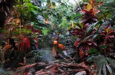 For a blast of the tropics in the middle of winter, check out the recently-renovated Victoria Butterfly Gardens! Inside is a balmy 25 degrees and home to ducks, flamingos, rare tropical birds and lizards, and of course, thousands of free-flying butterflies.