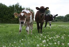 Meet the farming families with Organic Meadow! One of this year's National Leaders Milk The Cow, Getting Up Early, Farmers, Families, Meet, Organic, Animals, Animales, Animaux