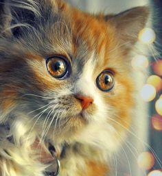 Cat Portrait ~ Danis