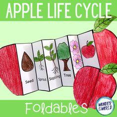 Apple life cycle foldable