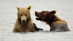 Unos bellos osos en la naturaleza :)