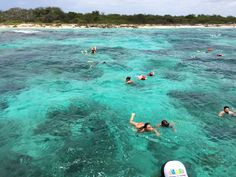 Snorkeling was so exciting. The underwater world is amazingly beautiful-the colors, the plants, the shapes, the fishes. Underwater World, Dominican Republic, Snorkeling, Caribbean, Paradise, Tropical, Shapes, Explore, Colors