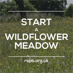Our project of the week: start a wildflower meadow! #homesfornature