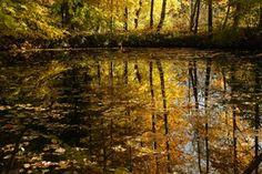 goldener Oktober/10897530