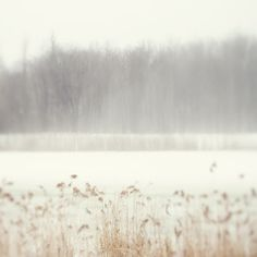 wintry pond.  Great Photos on this site.  Makes me want to break out the watercolours.