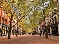 Autumn in Pacific Northwest #pioneersquareseattle #occidentalpark #pioneersquare #fall #foliage #falfoliage #leaves #seattle #washington #travel #travels #beautiful #weekend #vacation #street #city #citylife #cityscape #park #trees #sun #sunny #color #autumn #pacificnorthwest #pnw