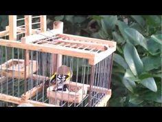 cage pi ge moulinet multireprise oiseaux a vendre cage trap multireprise for sale youtube. Black Bedroom Furniture Sets. Home Design Ideas