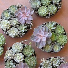 diy Wedding Crafts: Succulent Wedding Centerpiece Ideas | floral verde | get inspired by diyweddingsmag.com