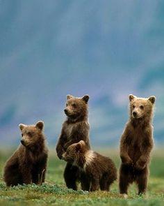 Wildlife in Katmai National Park in Alaska.