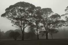 Fog~A vagueness comes over everything, as though proving color and contour alike dispensable., via Flickr.