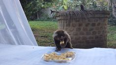 Tem mico.