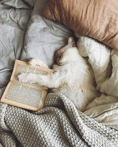 """My two favorite things in the world cats and books 😍🐈❤️ protect-and-love-animals: """" """" Crazy Cat Lady, Crazy Cats, I Love Cats, Cute Cats, Animals And Pets, Cute Animals, Gatos Cats, Photo Chat, Book Aesthetic"""