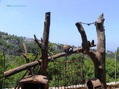 Haifa, the Zoo