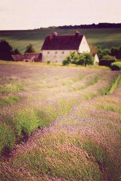 Lost in Time #LavenderFields
