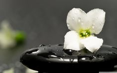 Make it a Zen Day. Lots of things to try to incorporate the mindfulness and meaning of Zen into your daily life. Zen Meditation, Heart Chakra Meditation, Meditation Musik, Meditation Youtube, Chakra Healing, Zen Wallpaper, Stone Wallpaper, Flower Wallpaper, Windows Wallpaper
