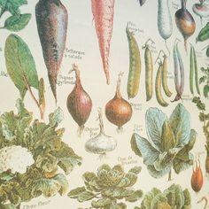Vintage #vegetables poster in my kitchen.