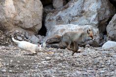 gato y zorro amigos turquia