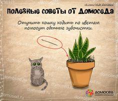 Советы от Домоседа - 3 - Советы для дома и хозяйства - Женский Мир