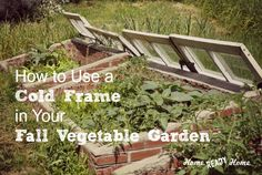 How to Use a Cold Frame in Your Fall Vegetable Garden (Home Ready Home)