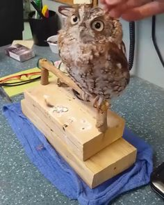 I Love My Owl - tiere - Animals Pictures Funny Owls, Cute Funny Animals, Cute Baby Animals, Animals And Pets, Baby Owls, Nature Animals, Wildlife Nature, Cute Animal Videos, Funny Animal Pictures