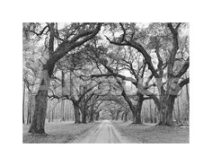 Oak Arches Landscapes Art Print - 36 x 28 cm